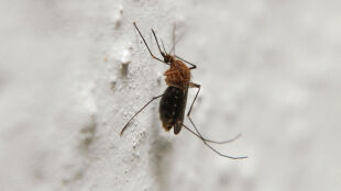 Pozbądź się brzęczącego komara