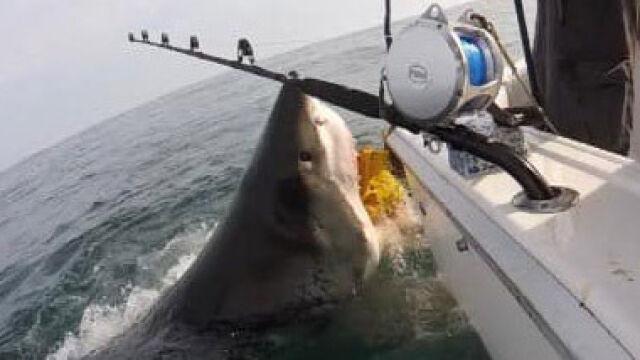"""Prawie jak w """"Szczękach"""". Rekin ludojad u wybrzeży New Jersey"""