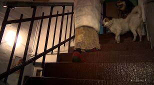 Przyjechali zabrać psy, pomagają właścicielce. Żyła bez pieca, prądu, wody