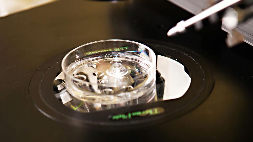 Słupsk przyjął program in vitro.  Miasto ma pomóc ponad 170 parom