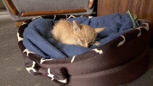 Wychudzony rudzielec między tirami. Uratowany kot znalazł dom w urzędzie