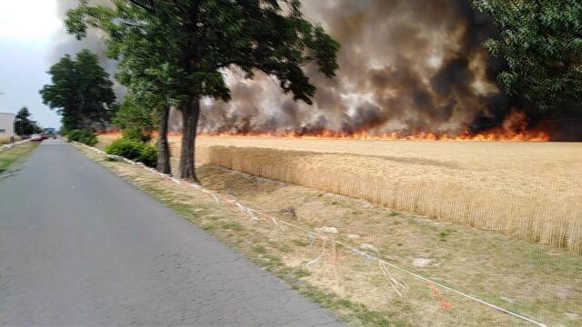 Pożary pod Jarocinem i w Łodzi. Spłonęło ponad sto hektarów zboża