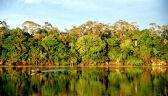 """Sprawozdawczyni ONZ oskarża prezydenta Brazylii o """"najazd"""" na Amazonię"""