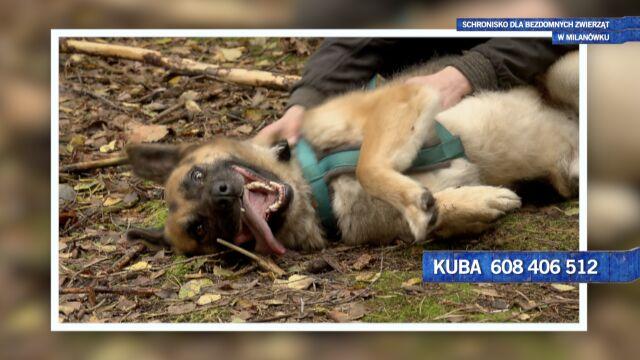 Kuba to podopieczny schroniska dla bezdomnych zwierząt w Milanówku