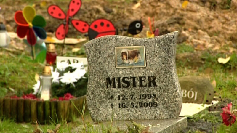 Cmentarz dla zwierząt cieszy się popularnością