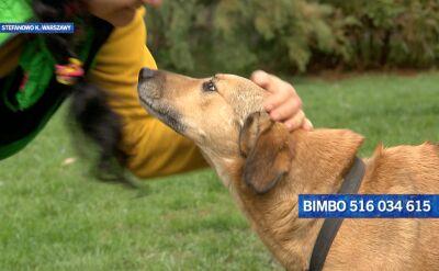 Bimbo szuka nowego domu