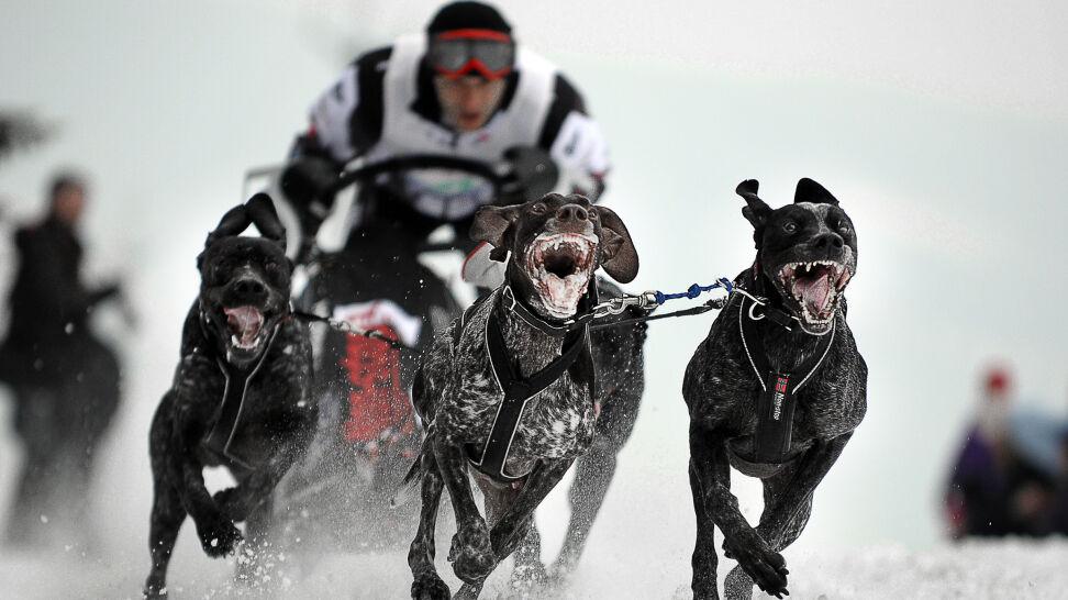 Trenowali w lesie wyścigi psich zaprzęgów. Myśliwi kazali się im zmywać,