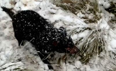 """""""Było bardzo dużo śniegu, więc chciałyśmy wyjść"""". Zima przyszła do Australii"""
