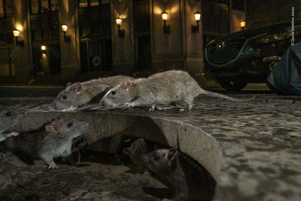 Zwycięskie zdjęcia w konkursie Wildlife Photographer of the Year