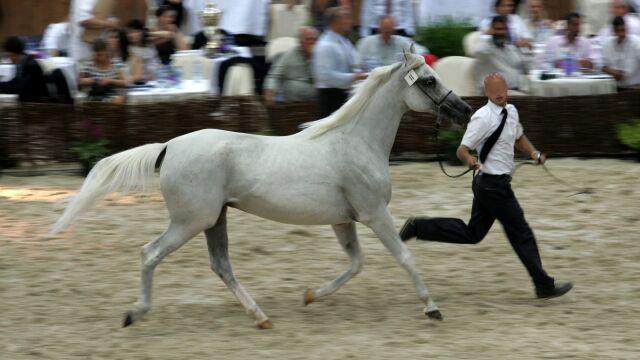 Rekordowa liczba koni w Narodowym Pokazie w Janowie Podlaskim