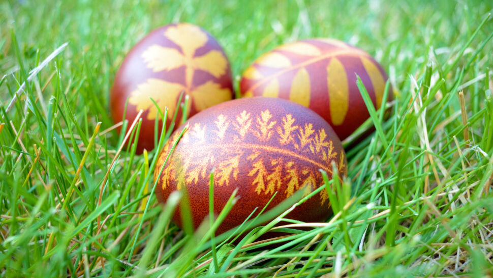 Jajo, czyli z czego powstało wszystko