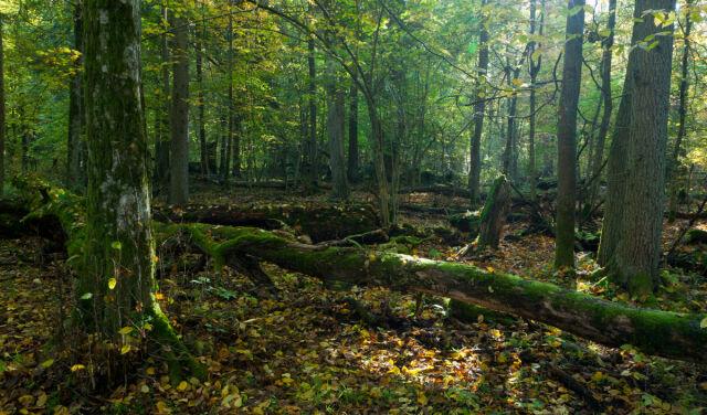 Grzybiarz znalazł w lesie ludzkie szczątki