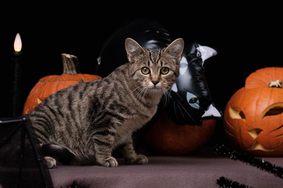 Koty polecają się do adopcji