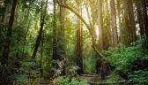Pracownicy leśni kontra ekolodzy. Trwa pacyfikacja blokady