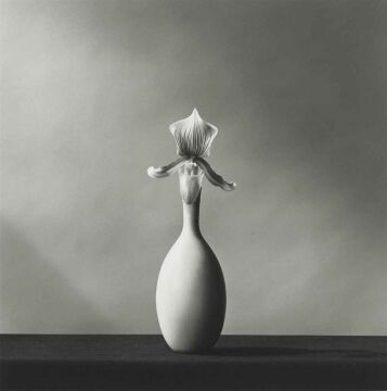 Single Orchid, 1982