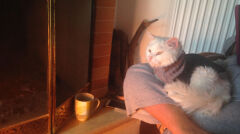 Kunkush na kolanach Amy Shrodes ogrzewa się przy kominku na Lesbos