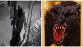 Wilkołak-włamywacz w rękach policjantów