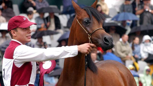 Kontrowersje wokół zmian w stadninach koni arabskich