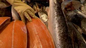 Radioaktywne ryby koło Fukushimy