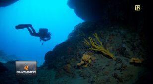 Chorwackie nurkowanie z Arturem Dąbrowskim