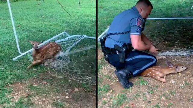 Jelonek zaplątał się w siatkę, pomogli mu policjanci