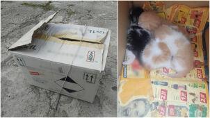 Cztery kocięta w kartonie pozostawione na śmierć