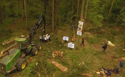 """Wycinka w Puszczy Białowieskiej. """"Te drzewa nie stanowią żadnego zagrożenia dla zdrowia lasu"""""""