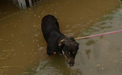 Ewakuowane zwierzęta trafiły do domów tymczasowych