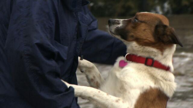 Historia tego psa poruszyła widzów. Teraz Reks sam wybierze nowego właściciela