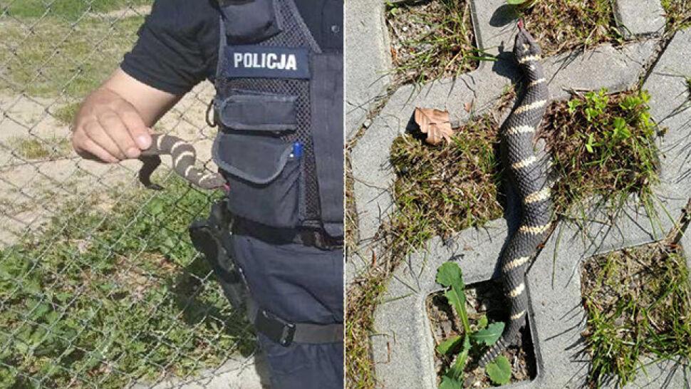"""Zostali wezwani do """"jadowitego węża"""",  na miejscu znaleźli gumową zabawkę"""