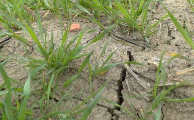Hydrolodzy ostrzegają: Polska pustynnieje
