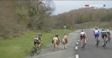 Konie wbiegły na drogę przed pędzącymi kolarzami na 2. etapie Vuelta a Espana