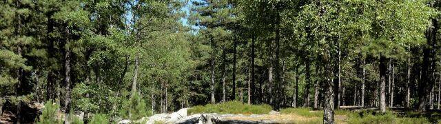 Kobieta w szóstym miesiącu ciąży zagryziona w lesie przez psy