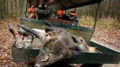 """""""Myśliwi, wbrew temu co twierdzą o swojej etyce, obchodzą się ze zwłokami zabitych przez siebie zwierząt bez żadnego szacunku"""