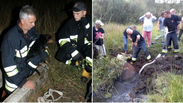 Spryt i doświadczenie. Tak strażacy ratują zwierzęta