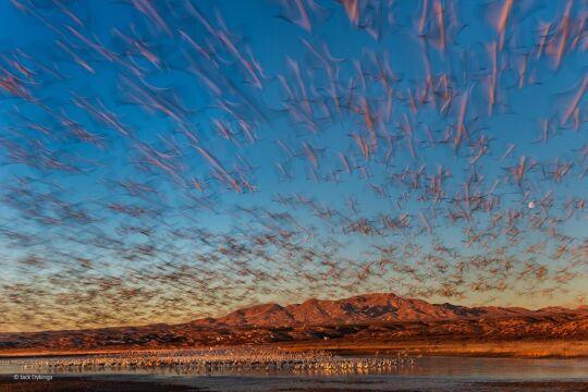 'Dawn Lift-Off' Jack Dykinga, USA