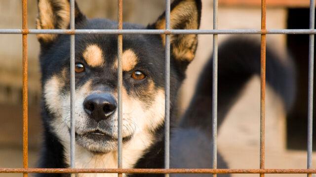 Wyrok w sprawie zabijania psów na mięso.