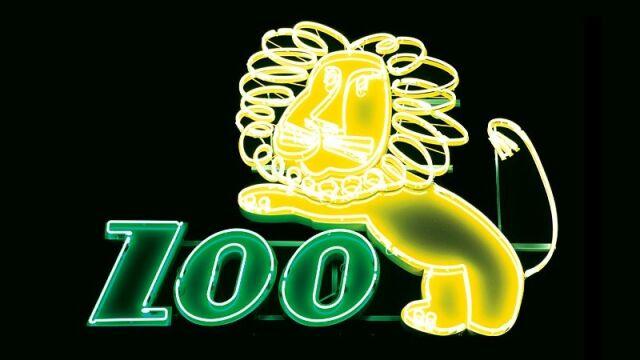 Neon nad wrocławskim zoo