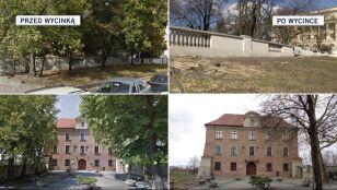 Stare drzewa znikają z Poznania