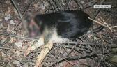 Mężczyzna zabił psa młotkiem