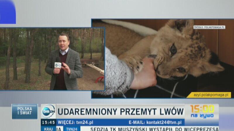 Dwa lwiątka trafiło do poznańskiego zoo
