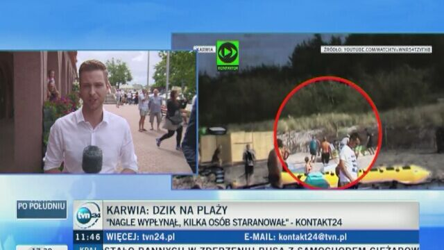 Strażnicy miejscy interweniowali na plaży, ale dzik uciekł