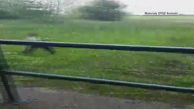 Na filmie widać, jak mężczyzna rzuca psem w stronę wody