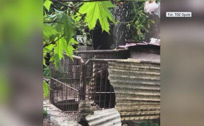 Zwierzęta żyły w ciasnych klatkach, robiły pod siebie