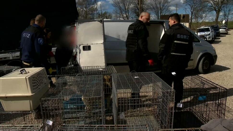 Akcja w schronisku w Radysach. Wójt odebrała około czterdziestu psów