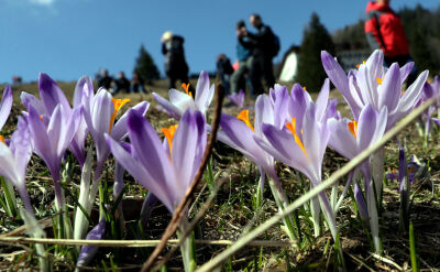 """""""Rekordowe liczby turystów"""". Polacy witają wiosnę"""