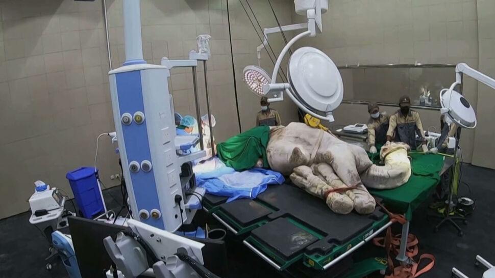 """""""Ten szpital jest błogosławieństwem"""". Arabia Saudyjska otworzyła lecznicę dla wielbłądów"""