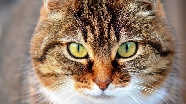 Prawnicy: wypuszczanie kotów z domów to łamanie unijnego prawa