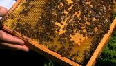 """Protest w obronie pszczół. """"Połowa żywności powstaje przy ich pomocy"""""""