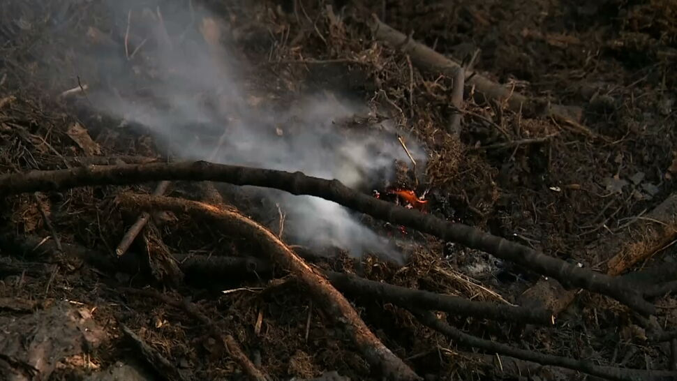 Najwyższy stopień zagrożenia pożarami w lasach. Ściółka jest sucha jak popiół